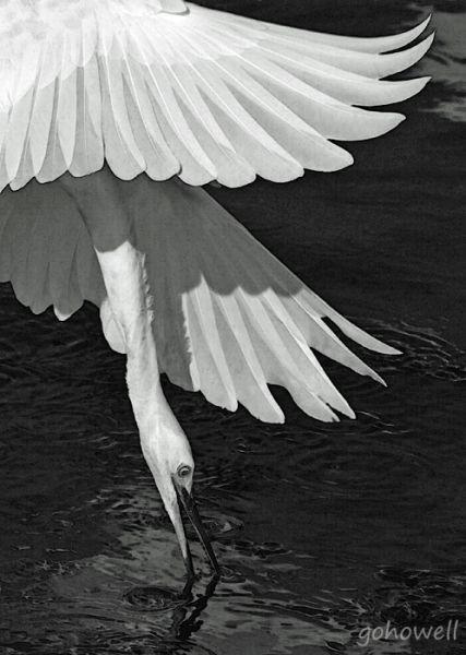 Birds And Other Animals Glenn Howell Northern Virginia Photographer